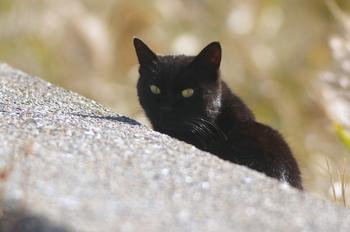 20121118三番瀬猫1.JPG