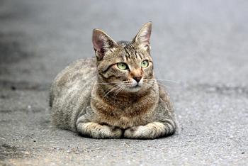 20150702近所の猫1.JPG